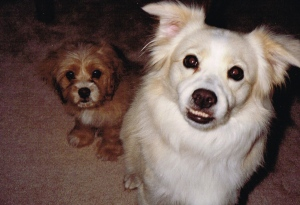 Peanut and Crackerjack, circa 1993. Peanut was a beauty, but as our friend Elizabeth put it, not very